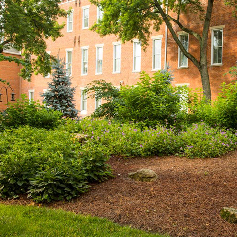beautiful landscaped gardens at 10 wilmington place