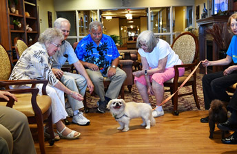 residents have fun with fury puppy visitors at 10 Wilmington Place